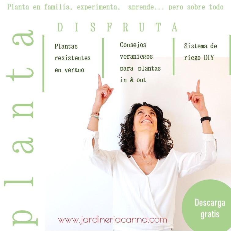 Planta_con_Canna